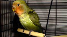 Juegos en la jaula para tu pájaro