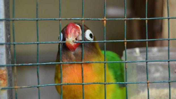 Jaula con juegos para tu pájaro