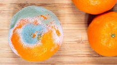 ¿Qué harías si una de las frutas del frutero tuviera moho?