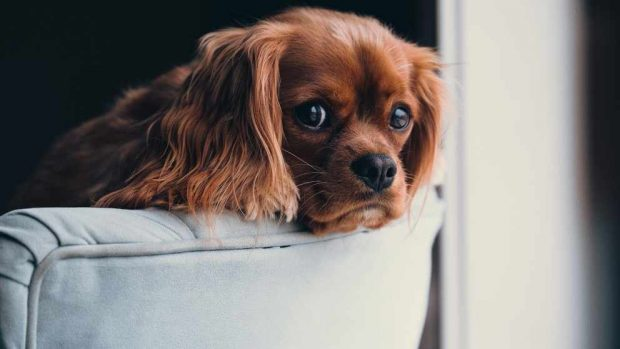 Adaptación perro en casa