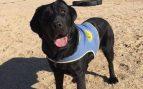 Roban a punta de pistola una perra preparada para ayudar a una niña con discapacidad en Aranjuez