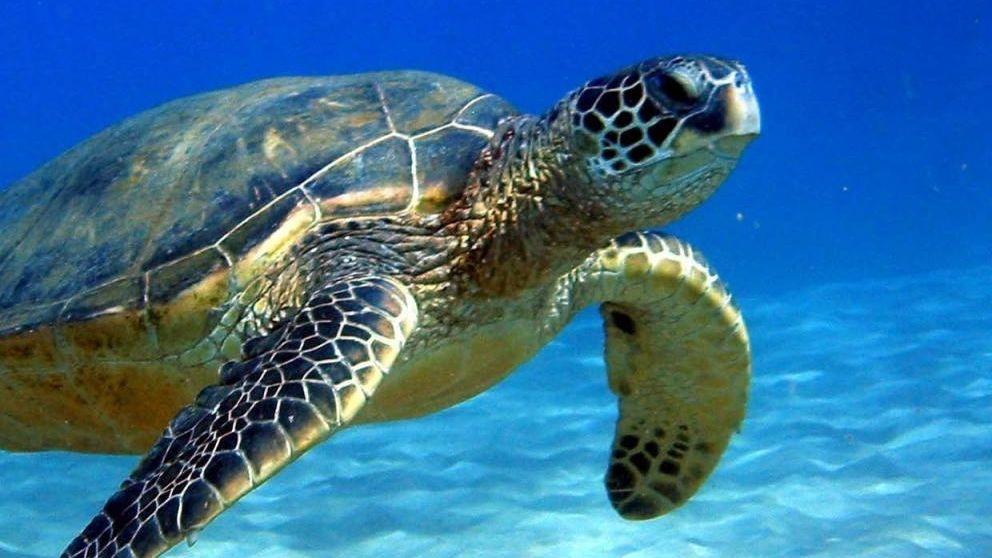 ¿Por qué las tortugas viven tantos años
