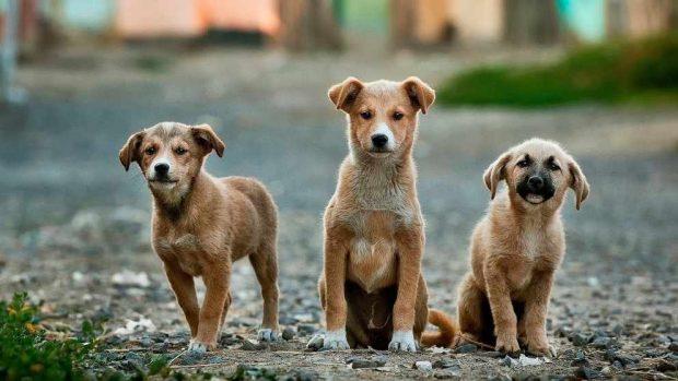Uso de anticonceptivos con tus mascotas