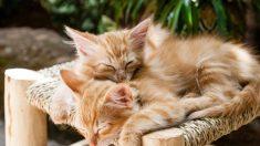 Anticonceptivos en perros y gatos