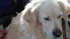 Enfermedades en perros y gatos: ascaridiasis