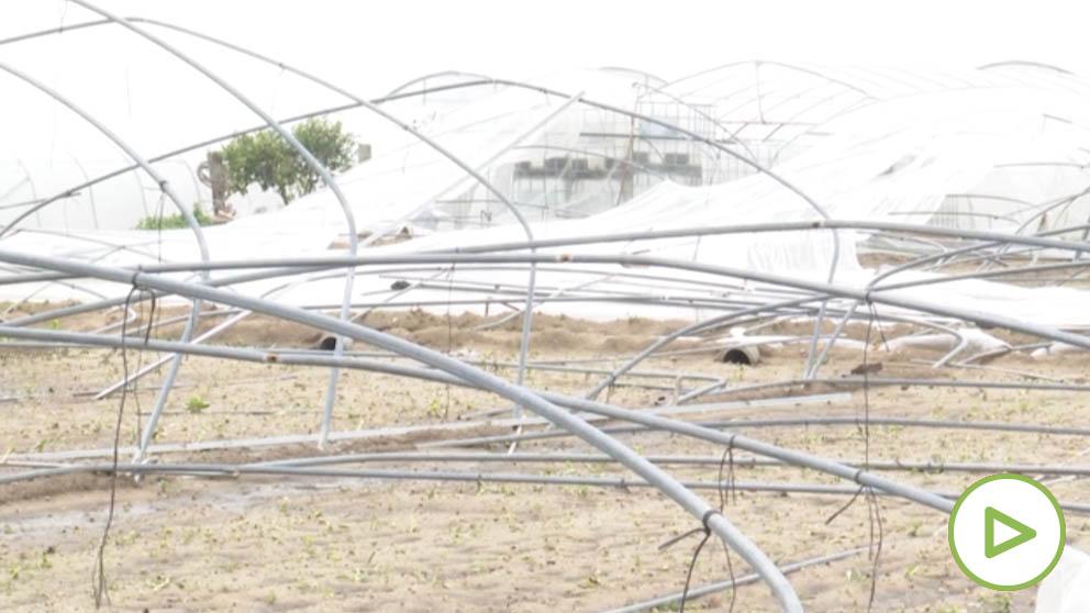 Millonarias pérdidas de los agricultores valencianos por 'Gloria'