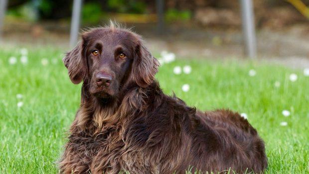 ¿Qué es la muda en los perros?