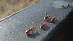 ¿Cómo combatir un hormiguero en casa?
