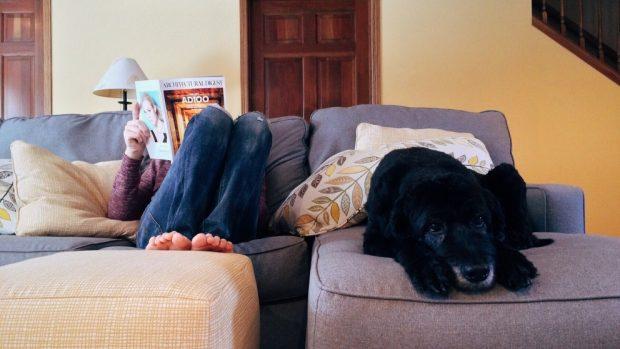 Consejos para el bienestar de tu perro