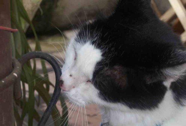 Un gato huele