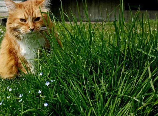 Gato y la hierba