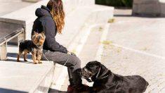 ¿Cómo pasear a un perro o a un gato?