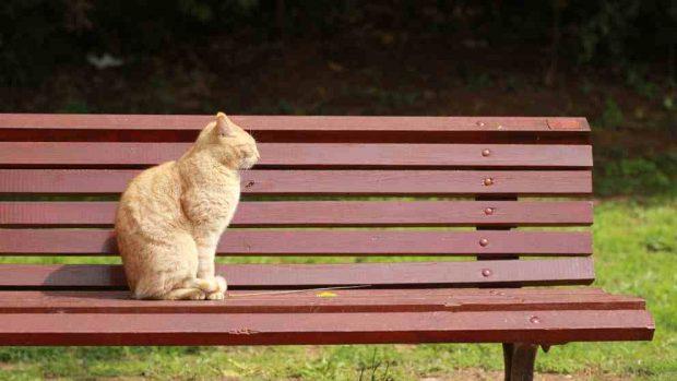 Gato en el parque