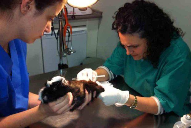 Tu veterinario es bueno