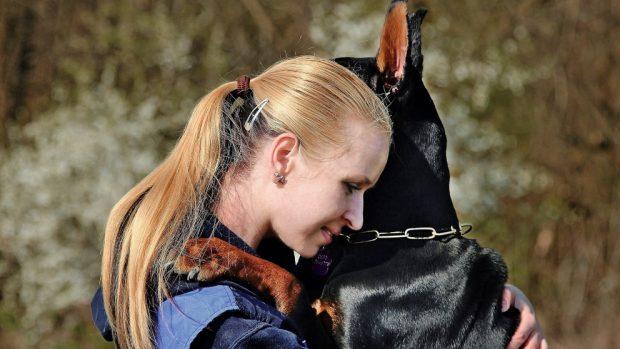 Abrazo doberman y mitos perros