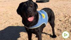Pocahontas, la perra robada en Aranjuez. Foto: EP