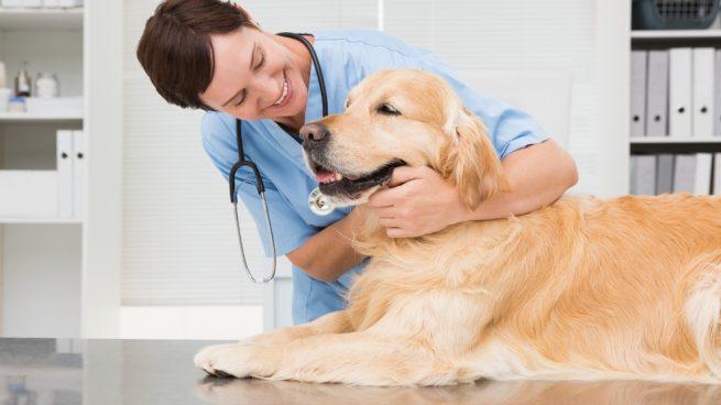 Perfil bioquímico en perros