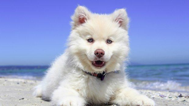 Los cambios hormonales en tu mascota