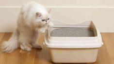 ¿Cómo tratar la incontinencia en gatos?