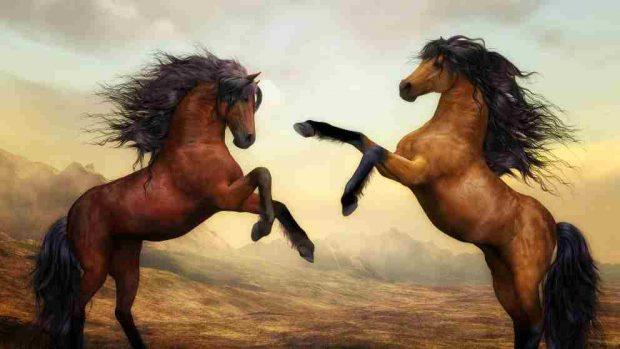 Mitos sobre caballos