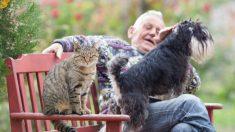 ¿Cómo saber si tu gato es celoso?