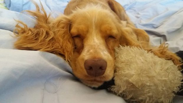 Enfermedades hormonales en mascotas