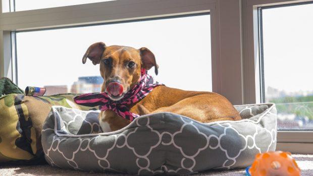 ¿Por qué los perros lamen las heridas?