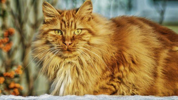 Cambios hormonales en mascotas