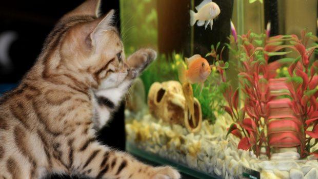 Gato y acuario