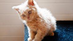 Curiosidades sobre la alergia a los gatos