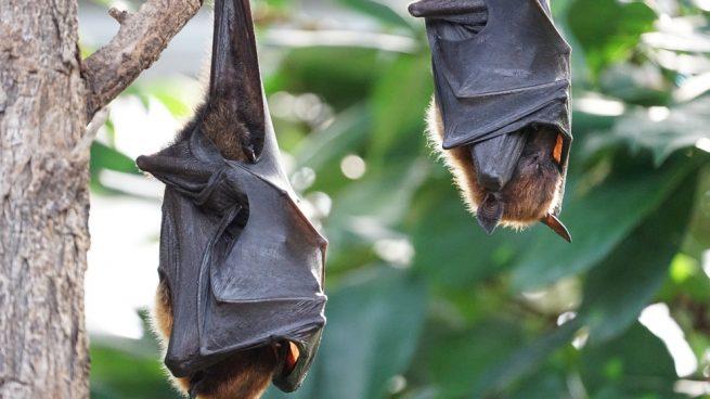 Hibernación murciélagos