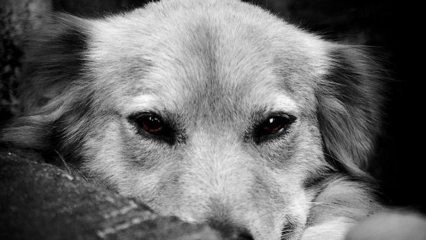 Los cálculos renales en tu perro
