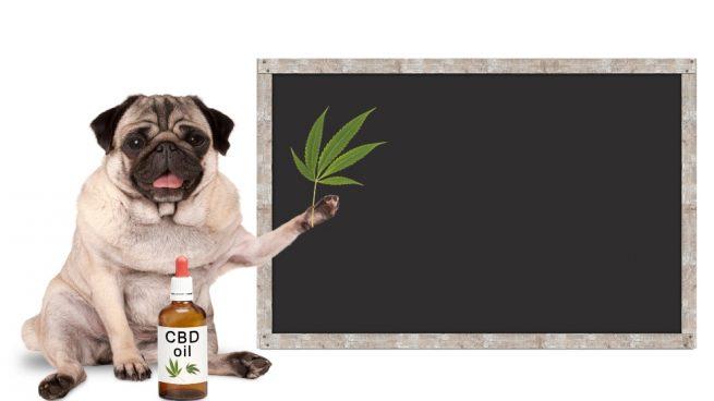 Usos del aceite de oliva para tu mascota