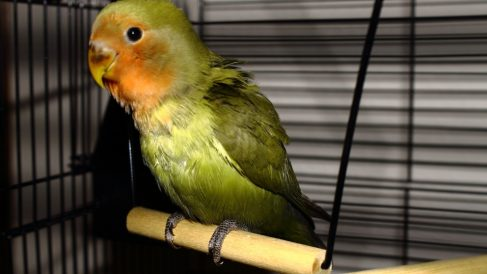 Exceso de peso en las aves