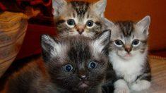 Algunas golosinas naturales para gatos