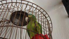 ¿Cómo tratar a tu pájaro doméstico en vacaciones?