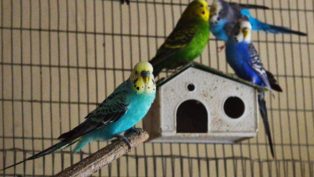 Pájaros en vacaciones