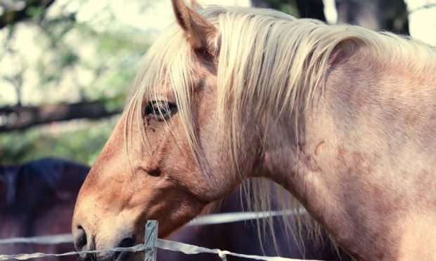 El oído en tu caballo