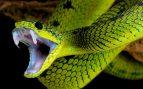 El veneno de la serpiente