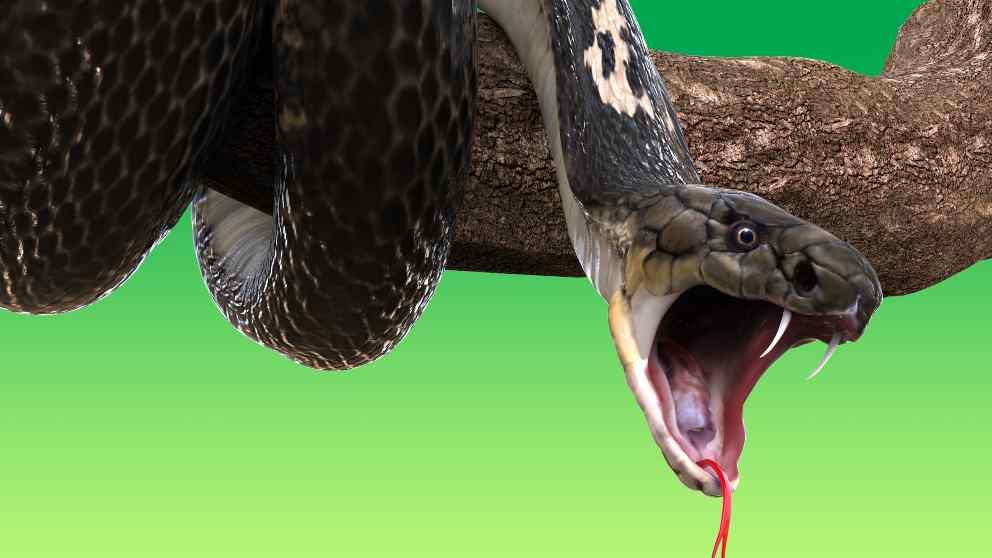 Consejos sobre el veneno de la serpiente