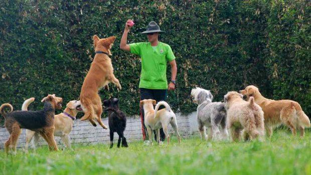 Actividades divertidas con tu perro