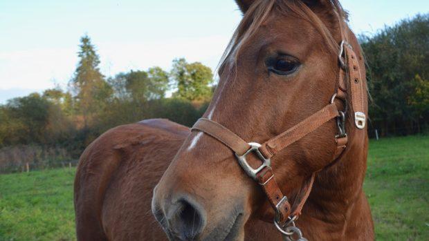 Los ruidos en tu caballo