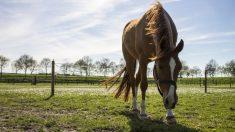 Ruidos, incidencia en caballos