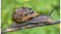 Variedades de moluscos hay