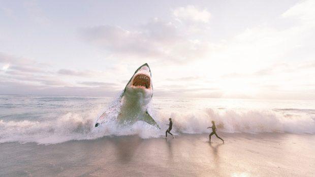 El depredador tiburón blanco