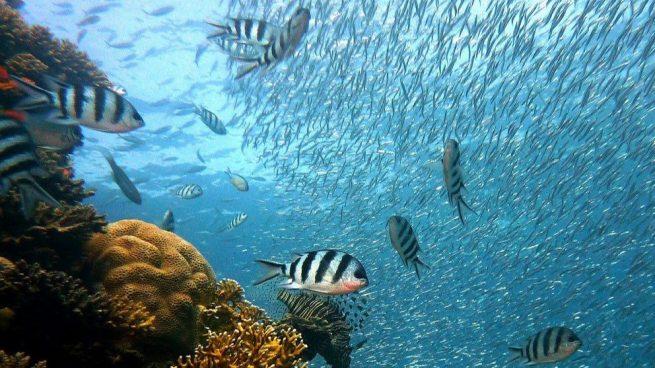 peces beben agua