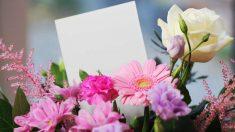 Las plantas son un regalo bonito y llamativo para cualquier ocasión