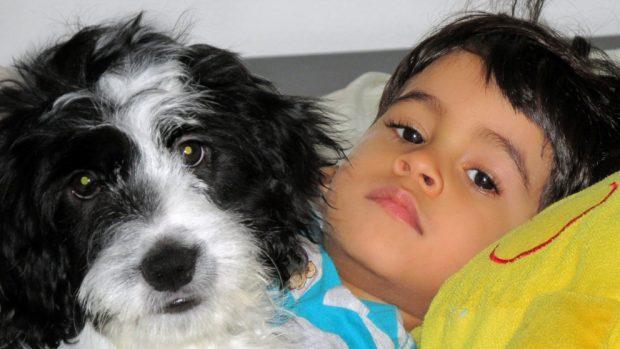 Terapia con perros en niños