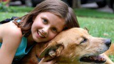 Terapia con perros en el bullying