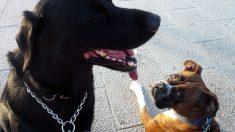 Cruces de perros de diferentes razas